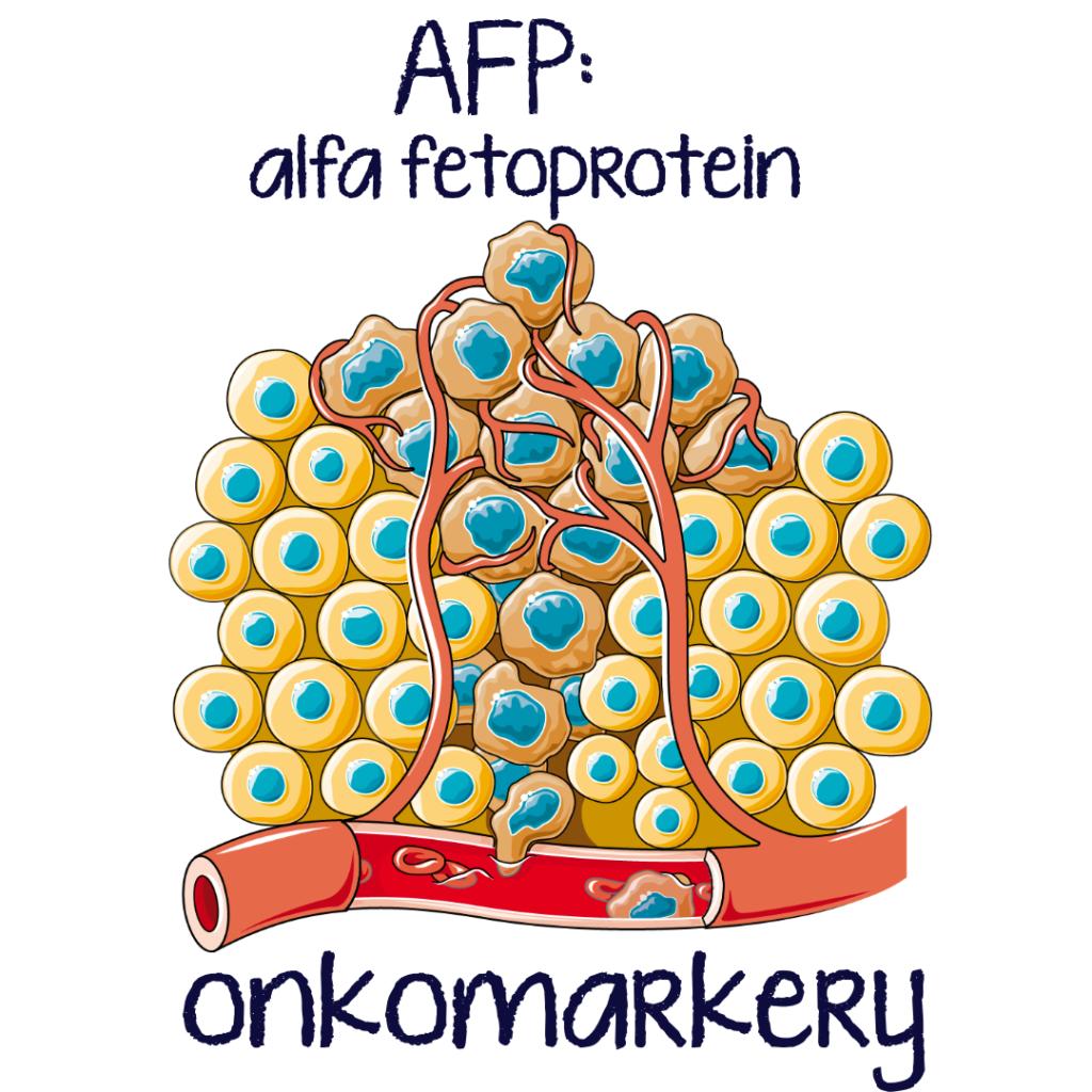 O alfa fetoproteinu