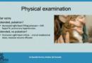 Pleurální efuze u koček – diferenciální diagnostika a management